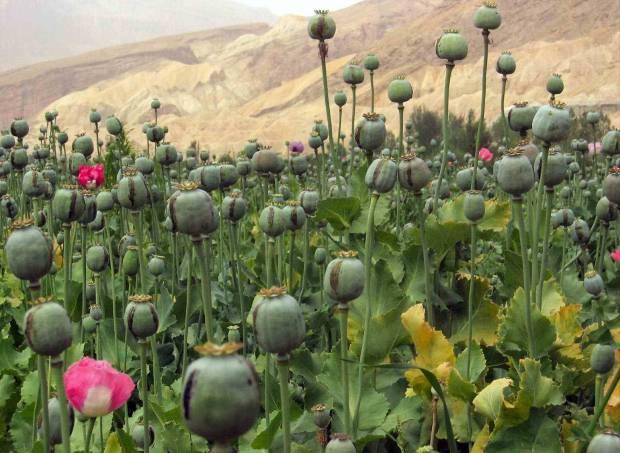 Afghanistan_16